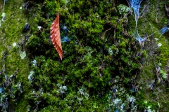 leaf-wissahickon-park-357