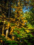 Phtograph of Fall leaves in color