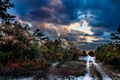 pine-lands-nj-3636