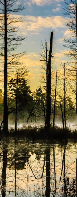 New Jersey Pine lands