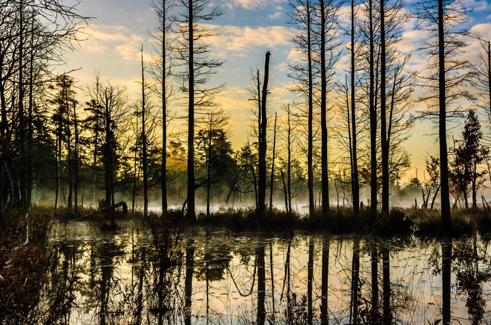 quaker-bridge-pinelands-0720