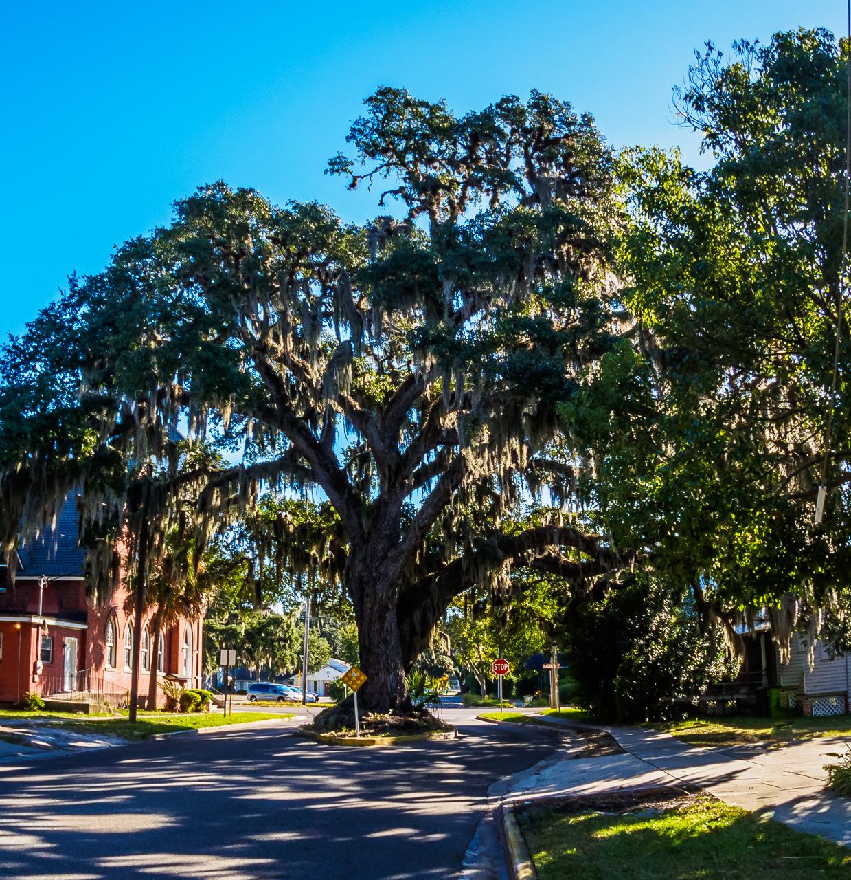 Kates Tree