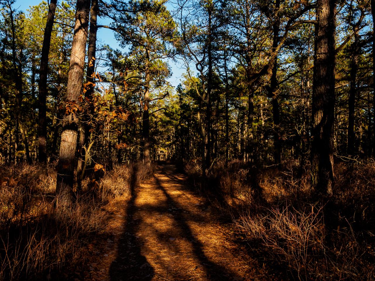 batona-trail-3893