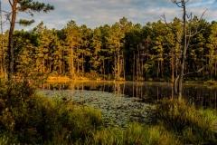 pine-lands-2562-1000x750