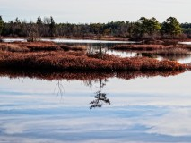 Pine lands Photograph from Whites Bog New Jersey-