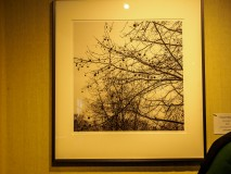 Tree branchs photograph at Perkins Art Show