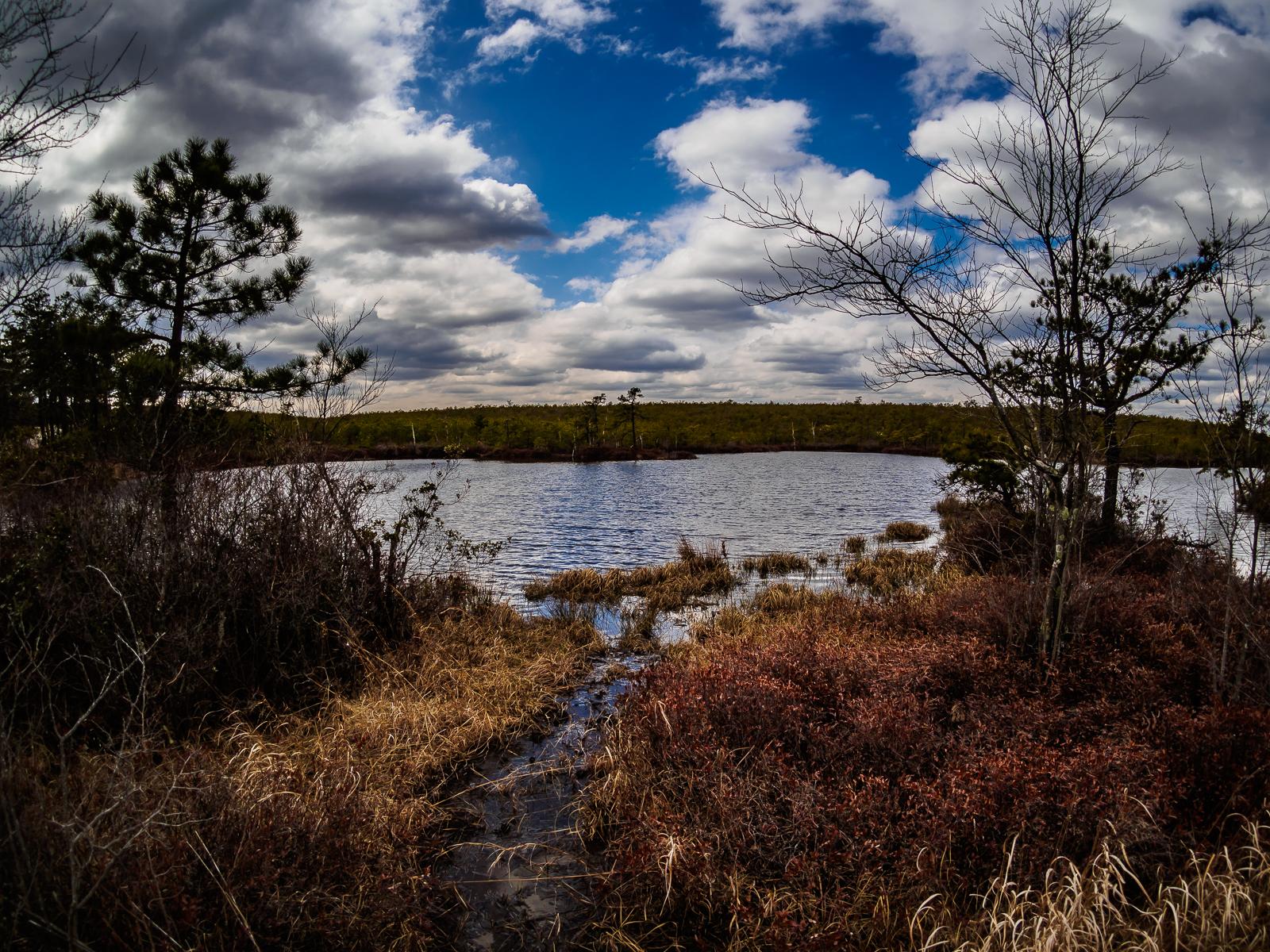 Pine lands Landscape photo at the warren-grove