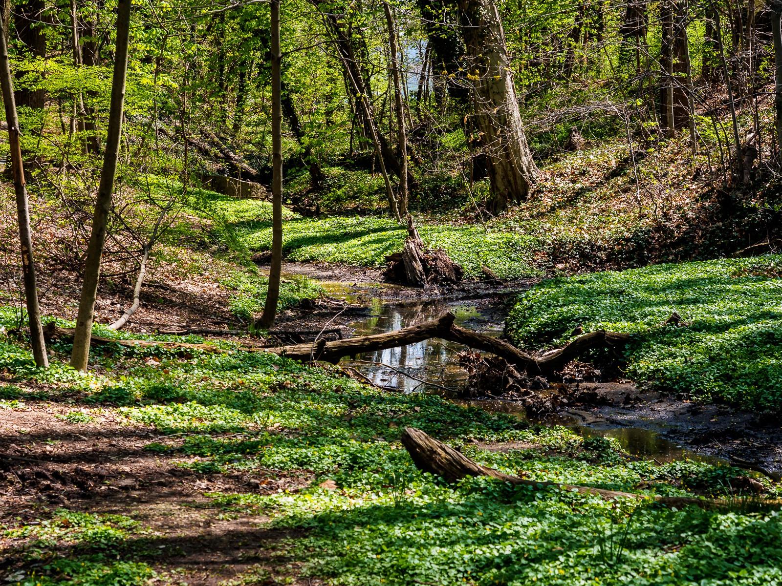 Hopkins Pond-5198