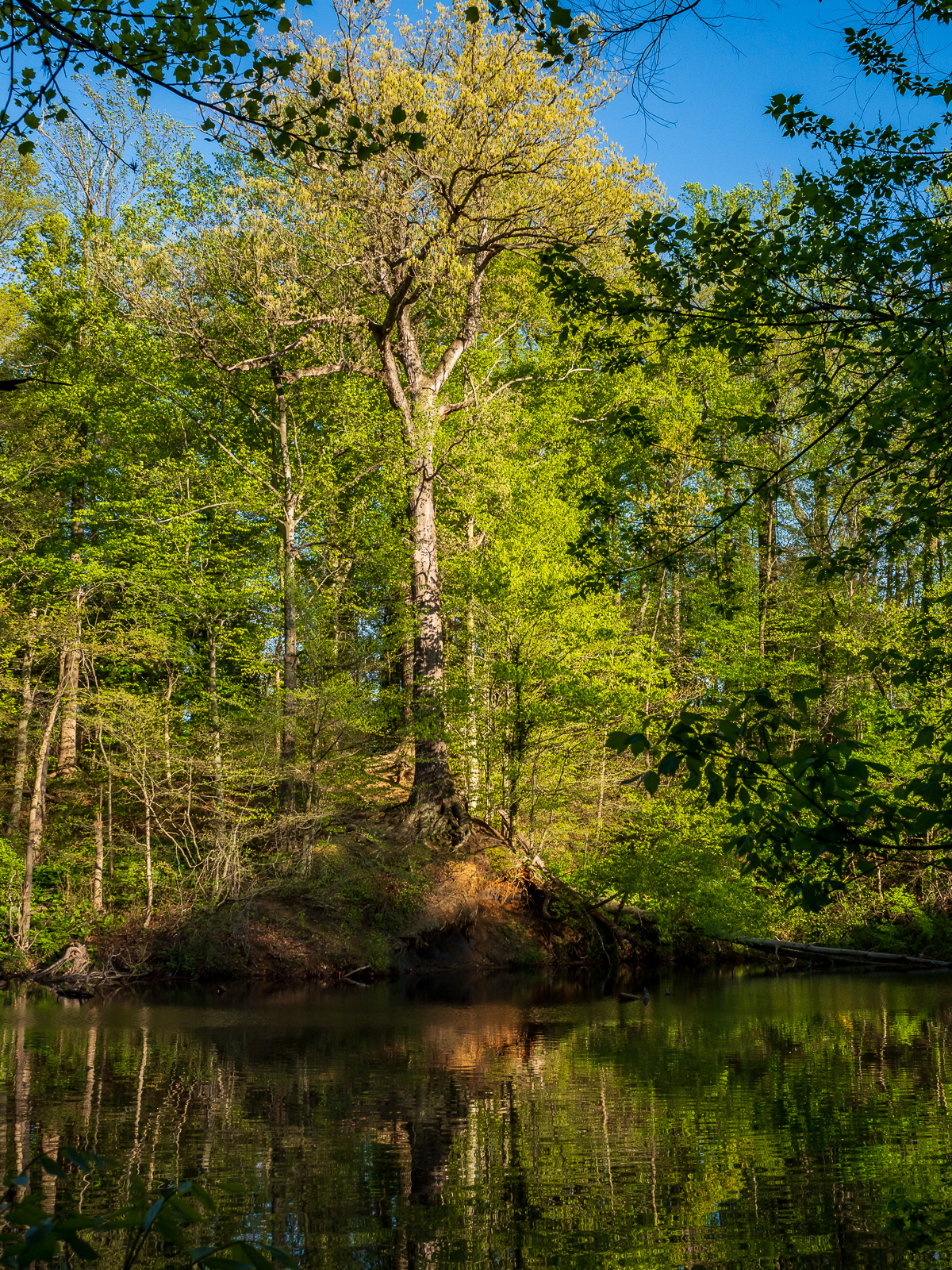 Trees at Hopkins Pond Photo