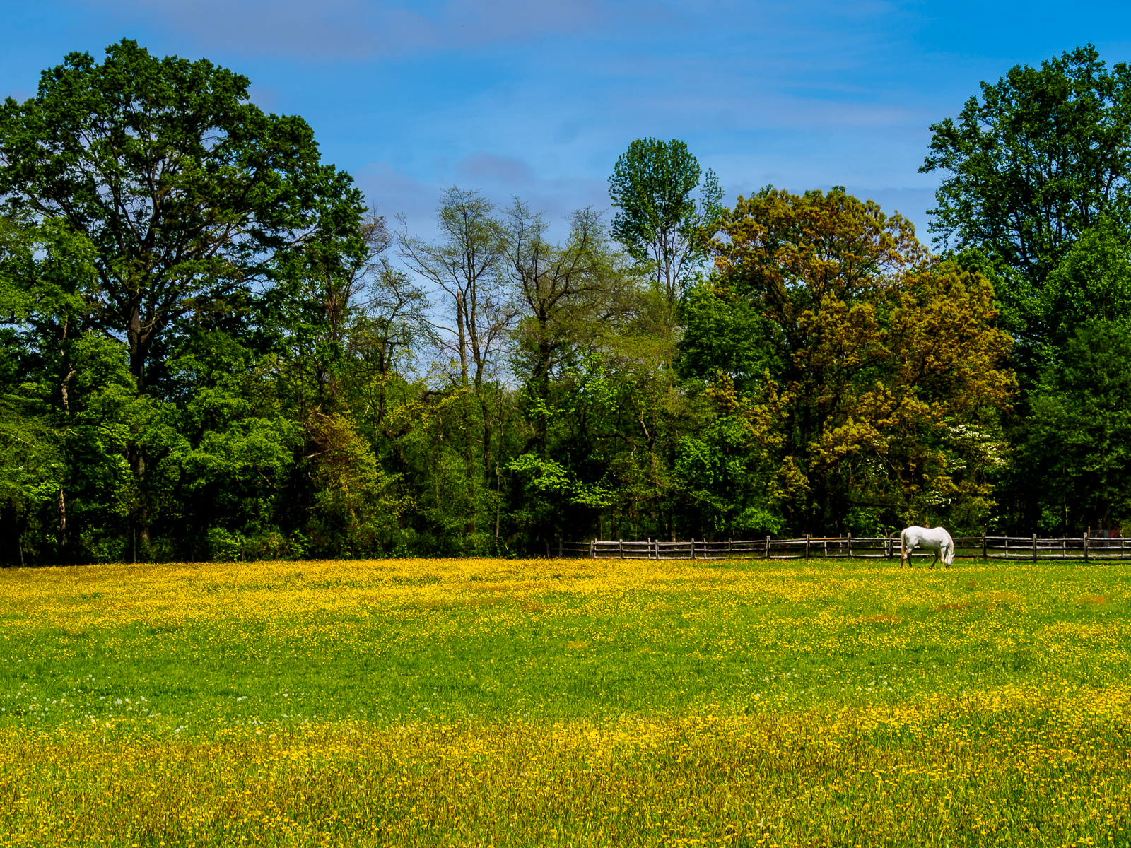 Horse Farm in Medford NJ Photo