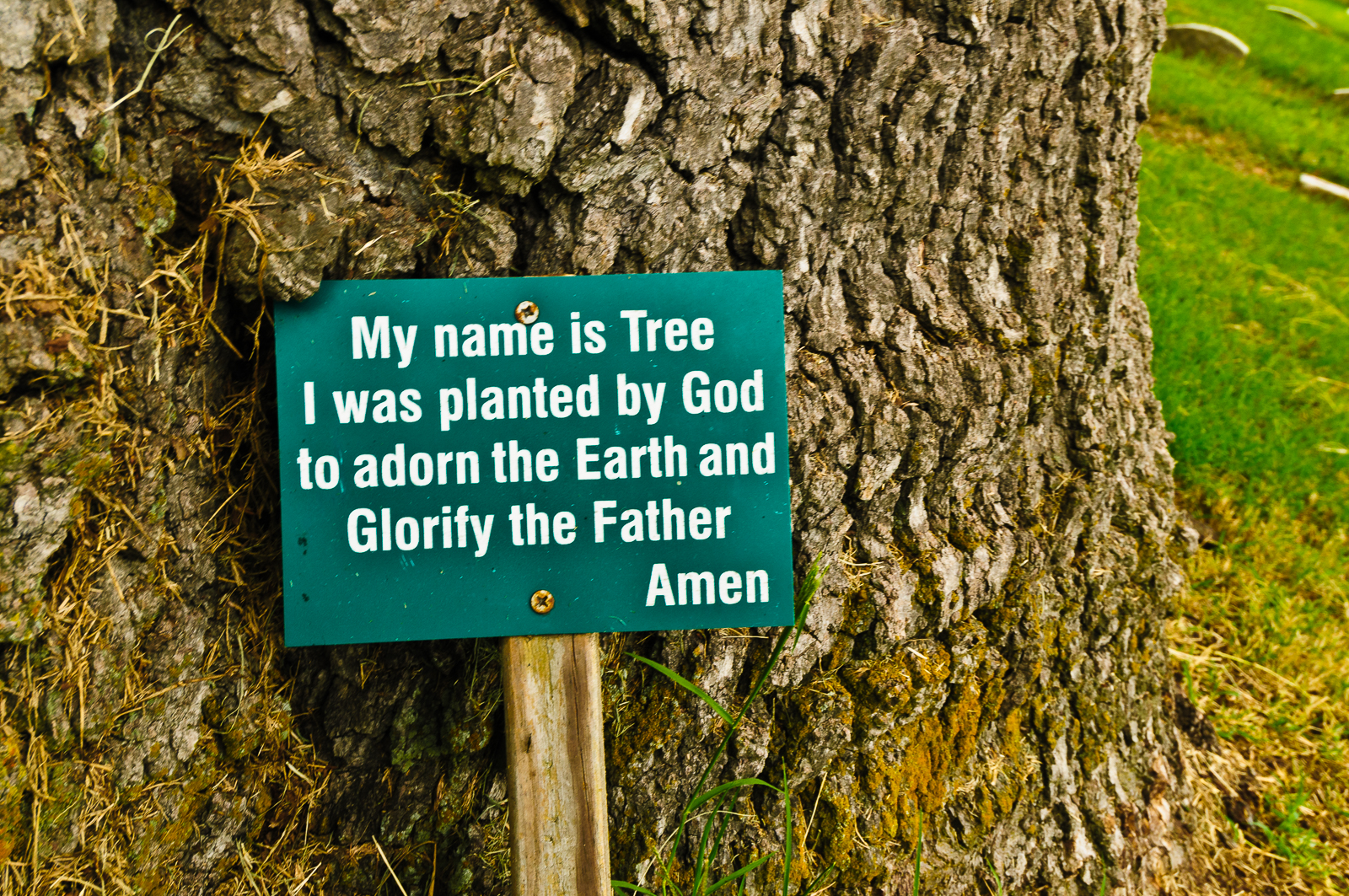 God-sign-at salem-oak-tree photograph