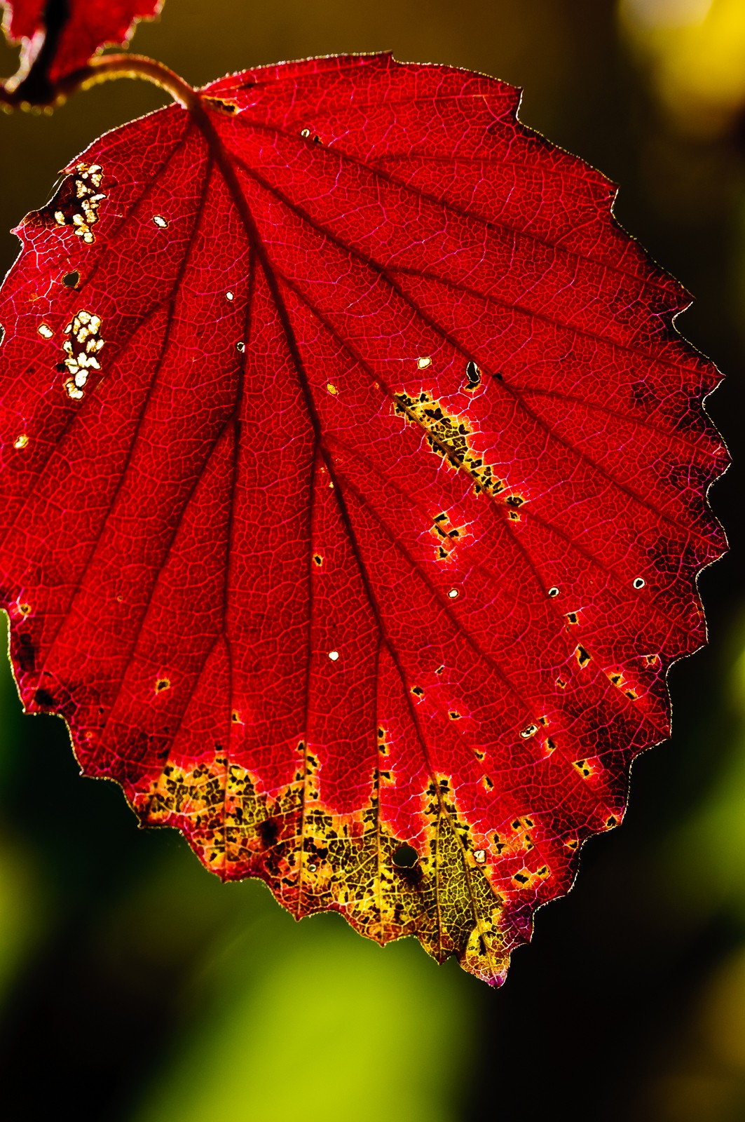 red-leaves-2617