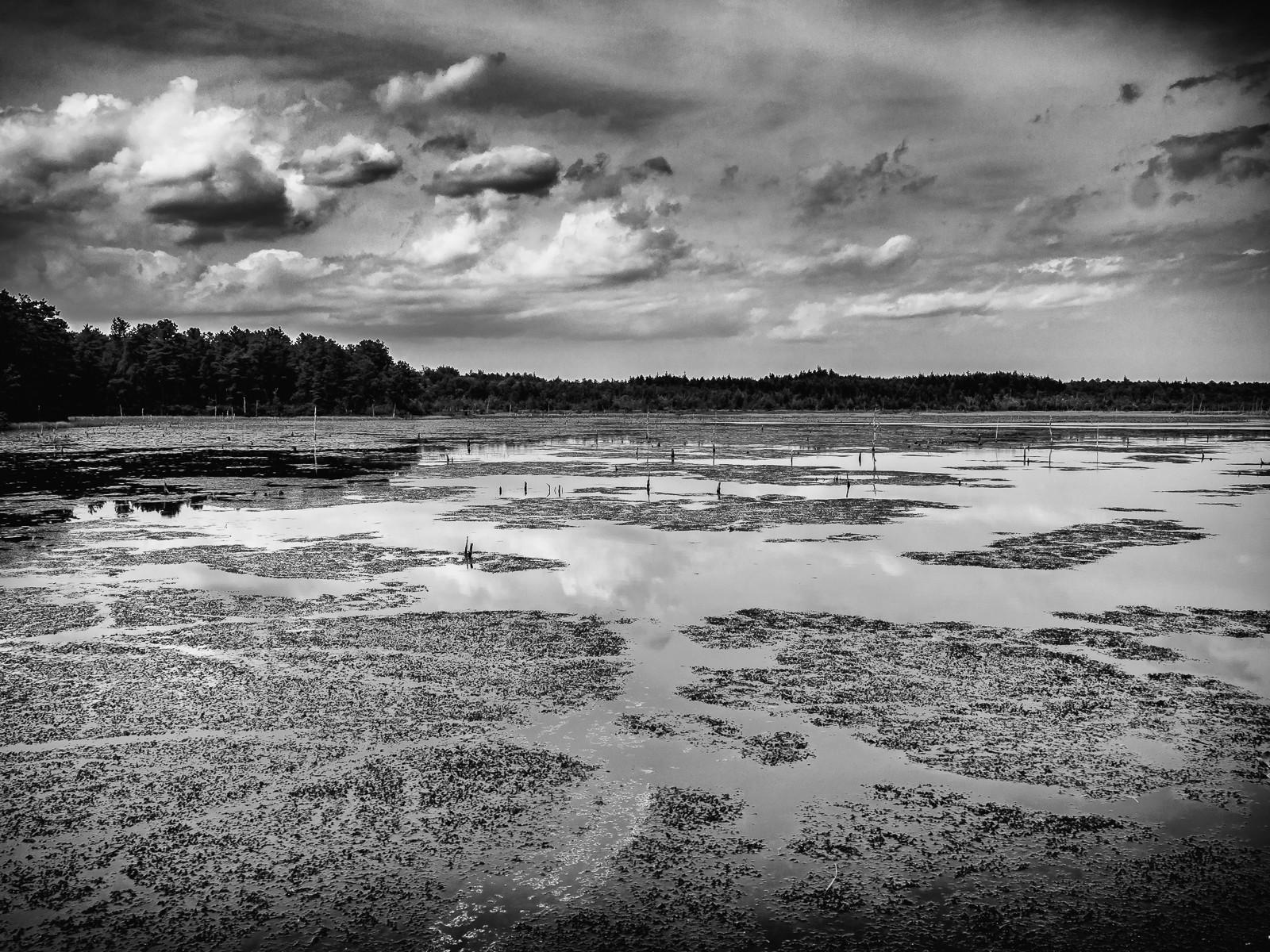 b&w-pinelands-franklin parker preserve