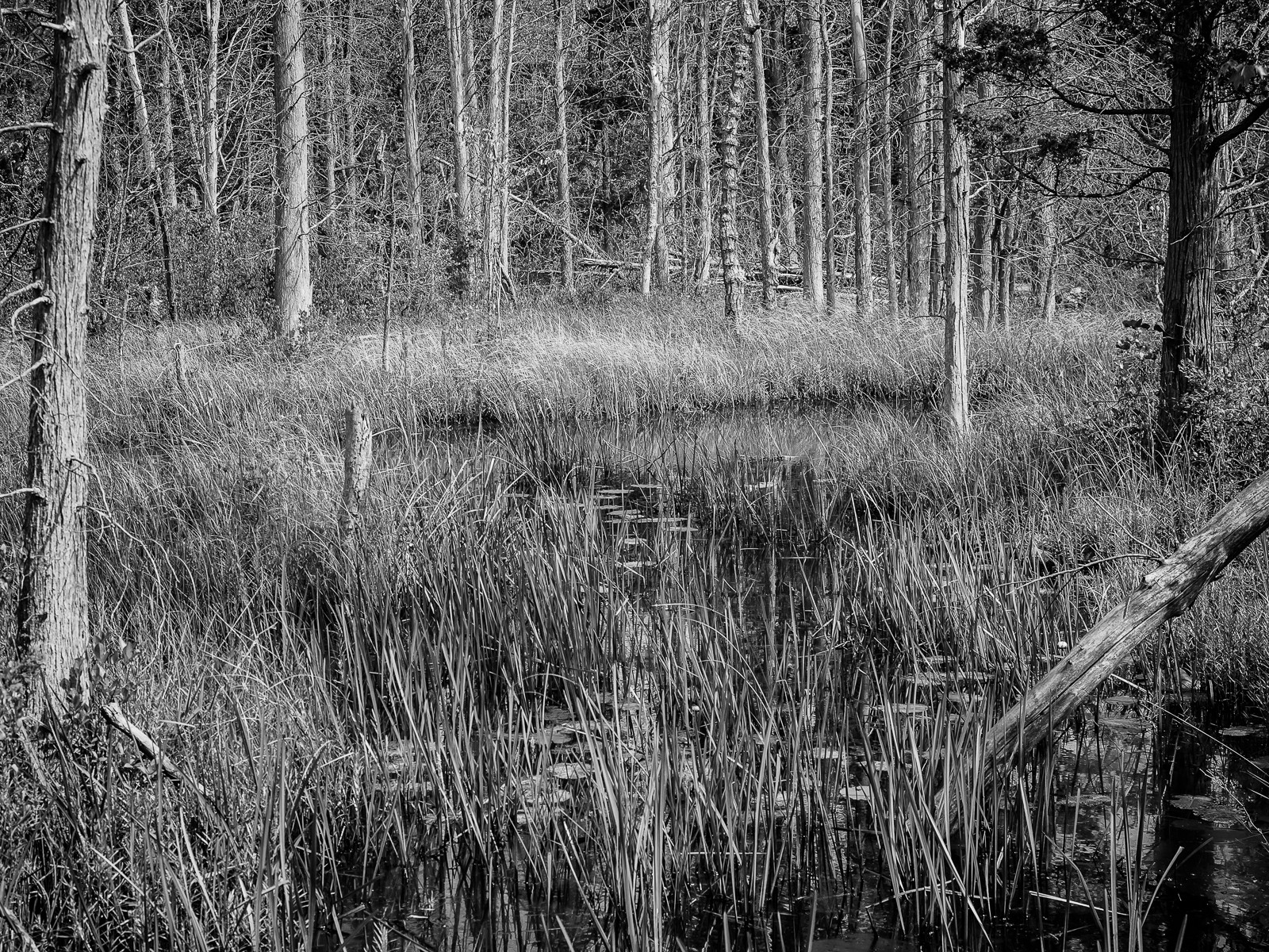 b&w-pinelands--3