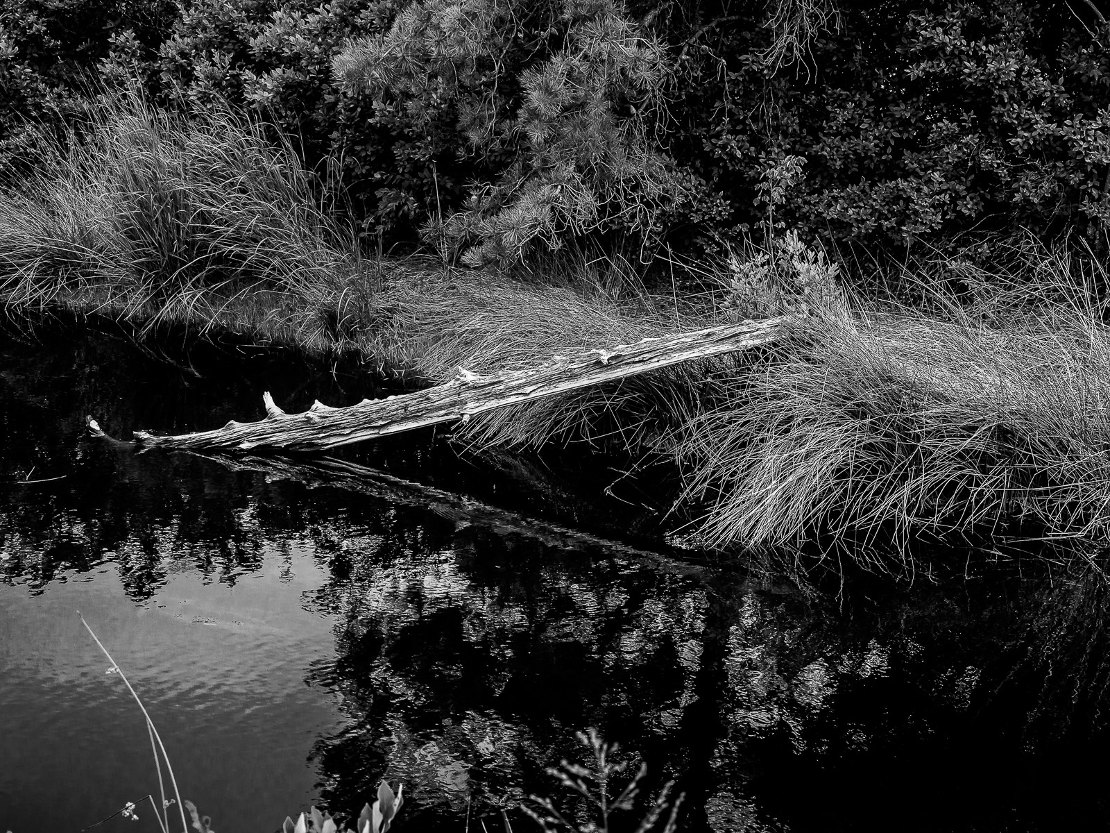 dead-cedar-6191