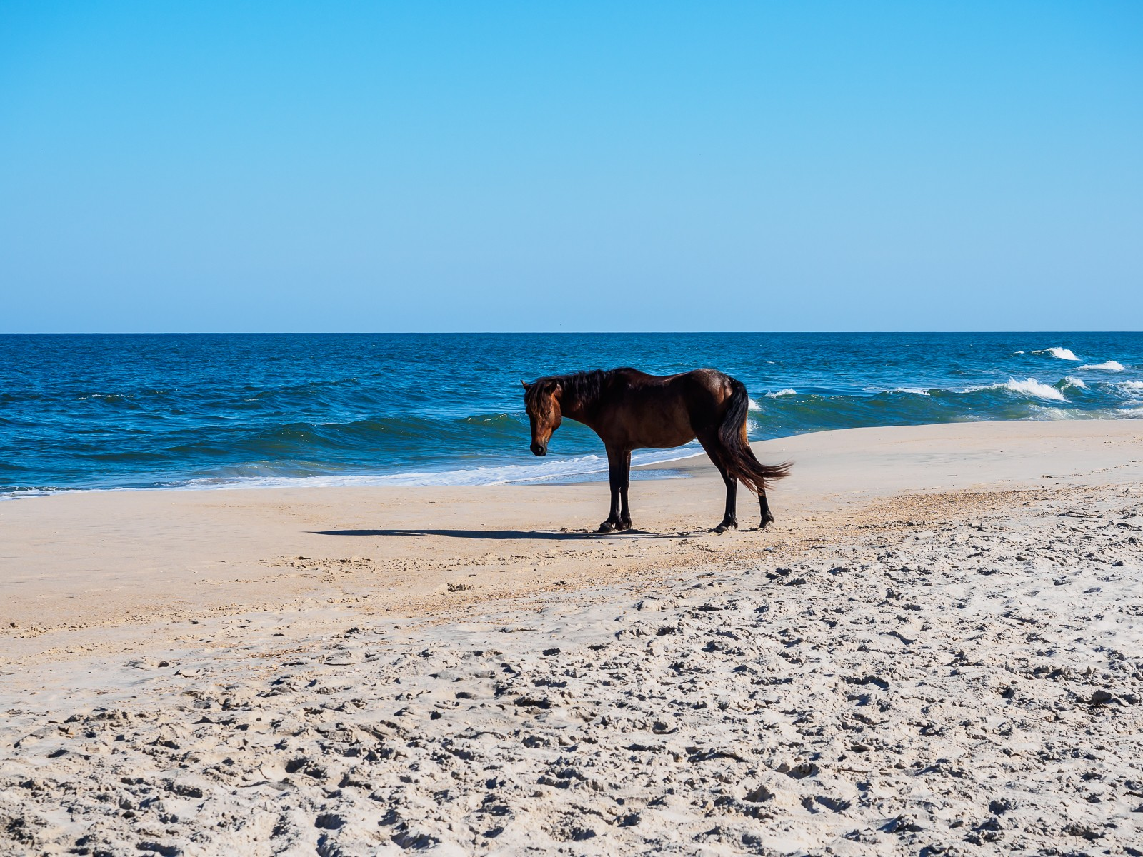 horses-assateague-6250
