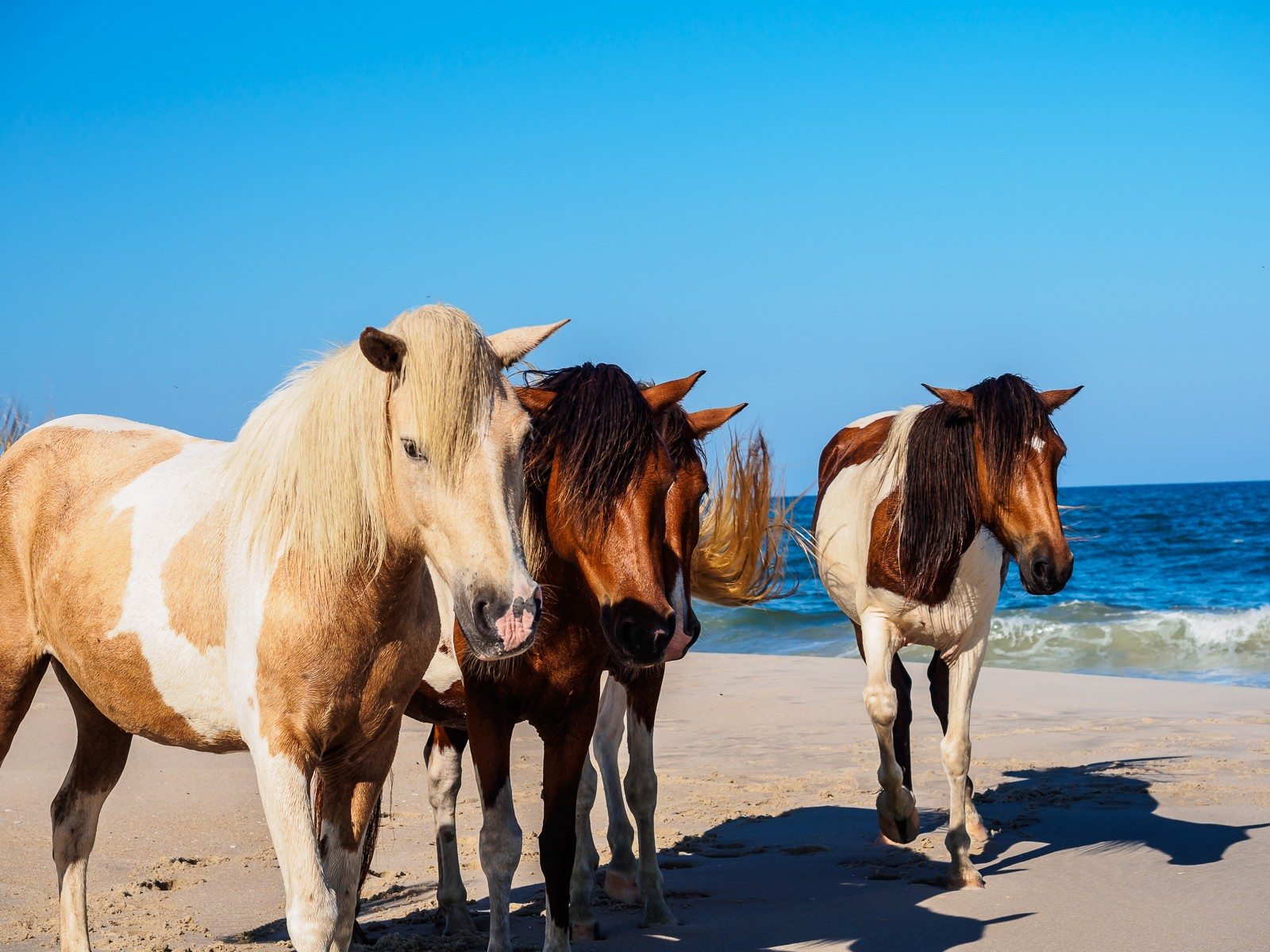 horses-assateague-6254