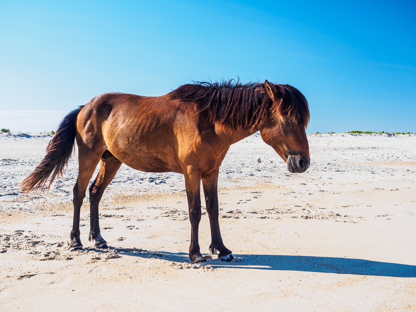 horses-assateague-6261