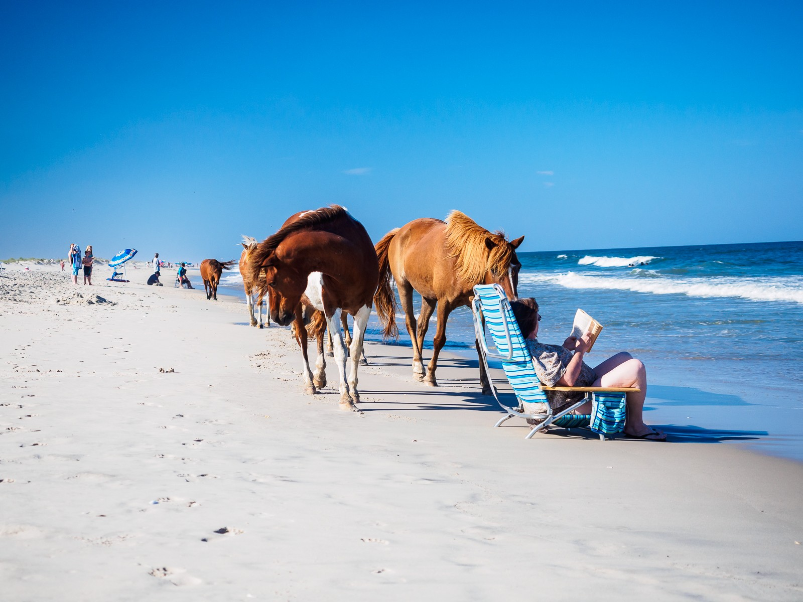 horses-assateague-6280