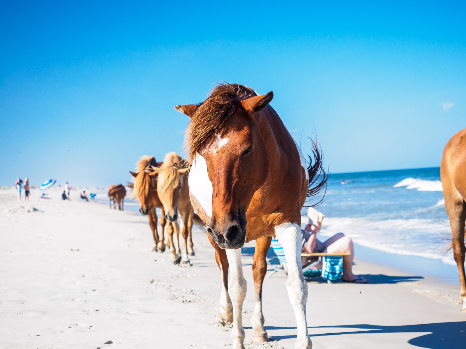 horses-assateague-6281