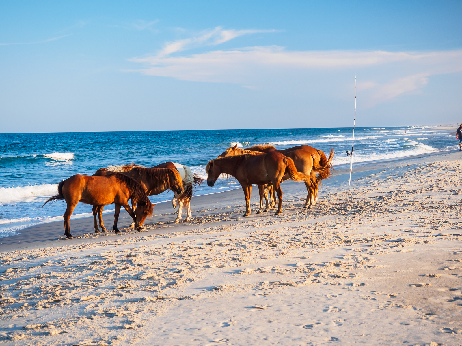 horses-assateague-6302