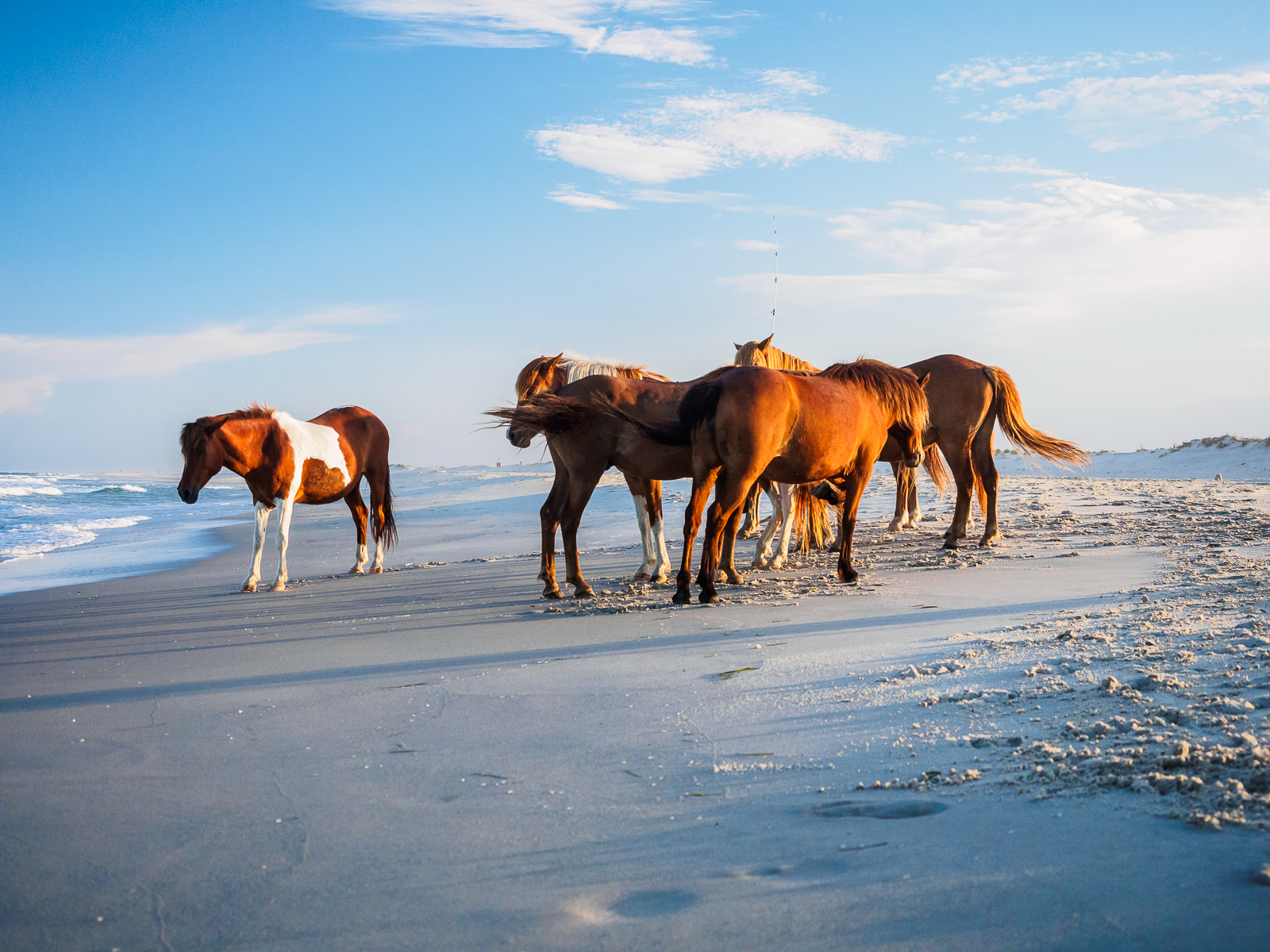 horses-assateague-6306