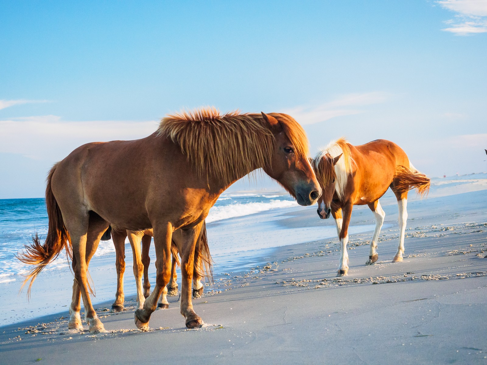 horses-assateague-6315