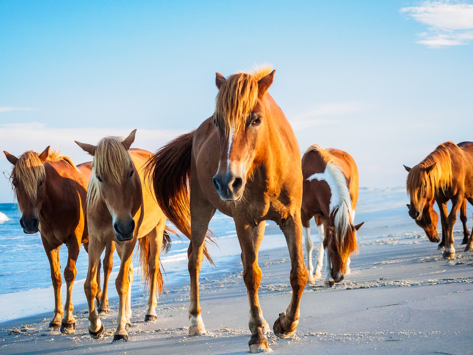 horses-assateague-6316