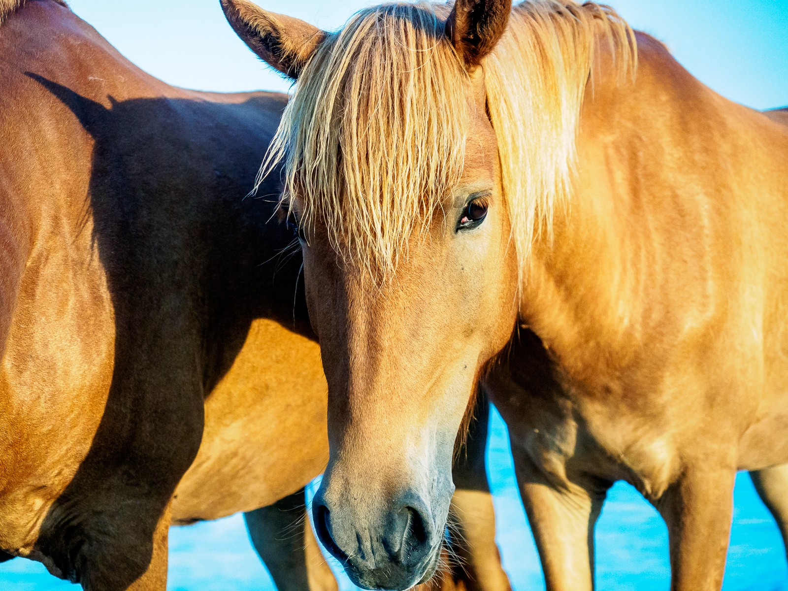horses-assateague-6323