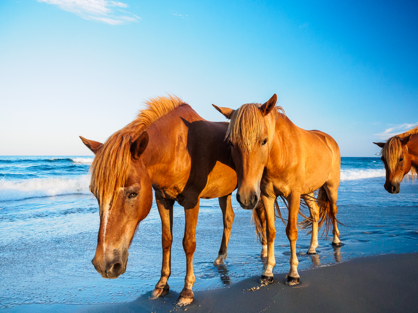 horses-assateague-6326