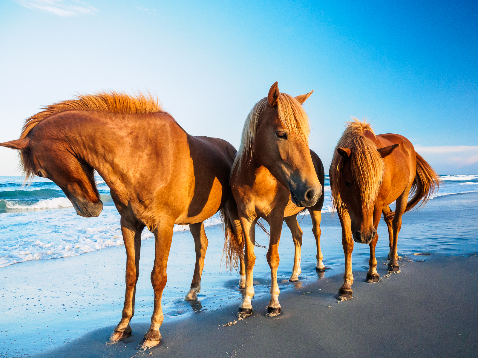 horses-assateague-6329