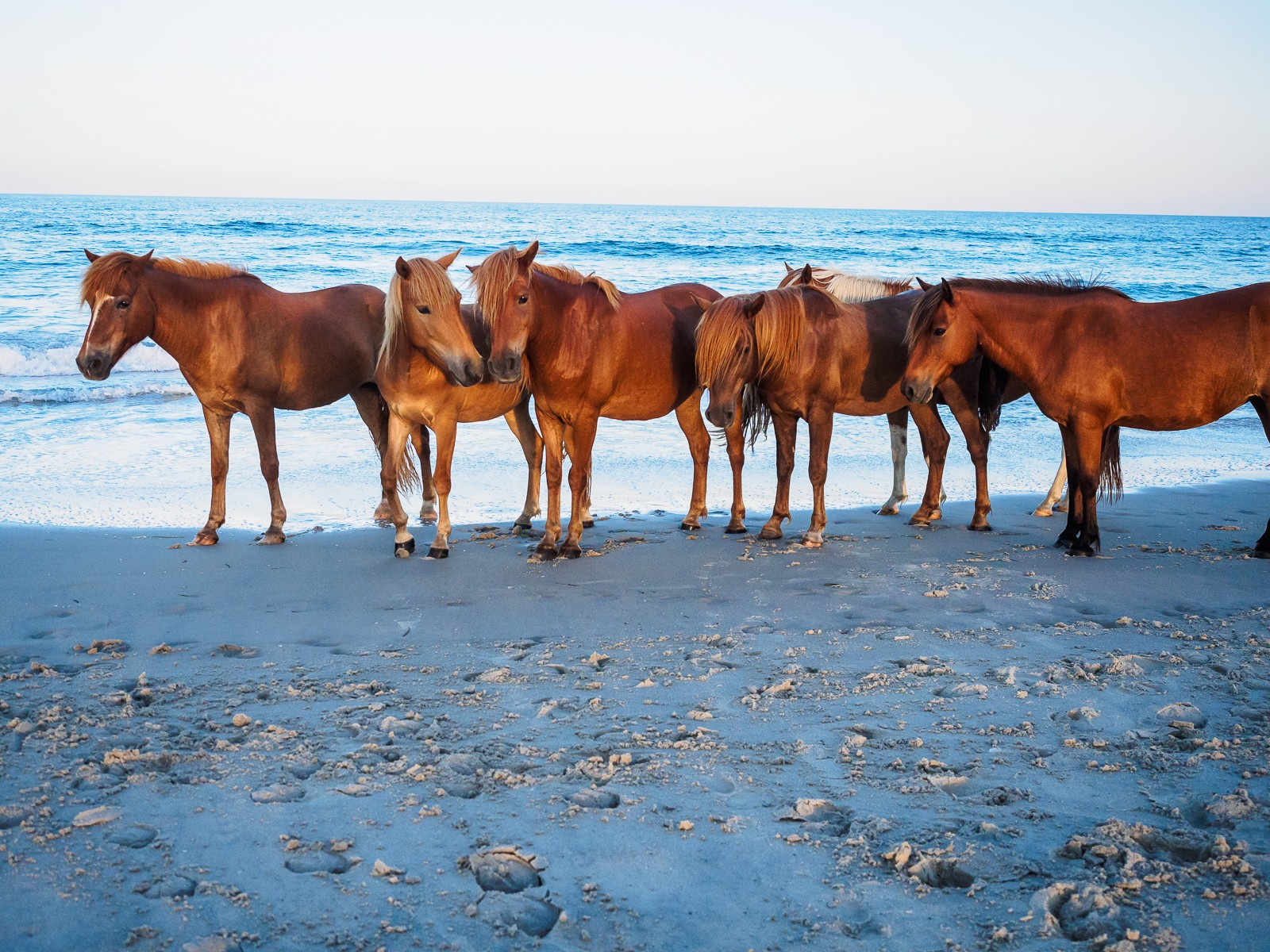 horses-assateague-6352