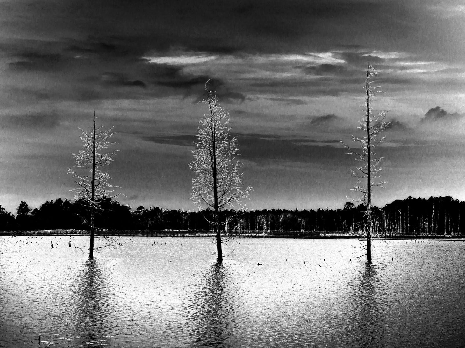 three-trees-6178