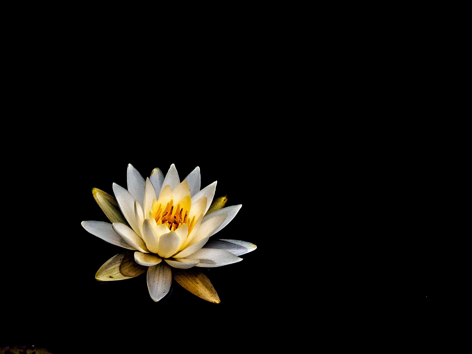 water-lily-6153