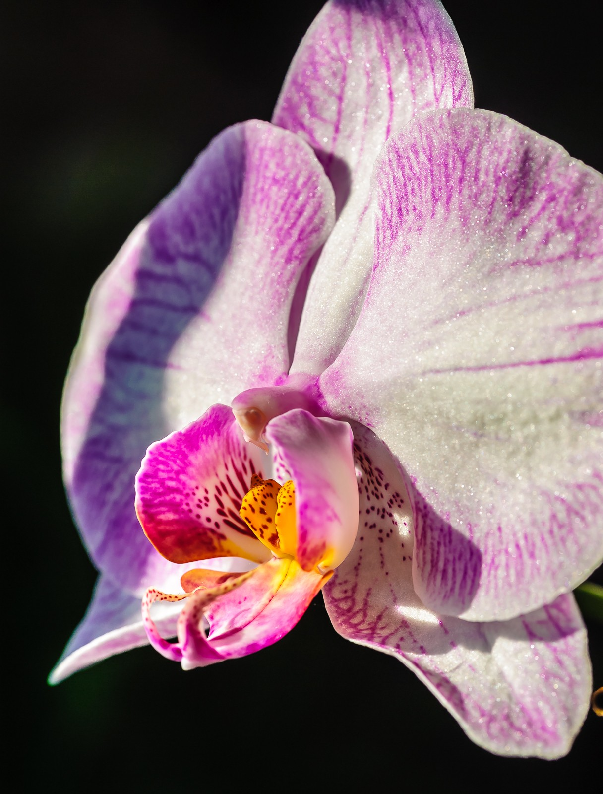 orchid-0092