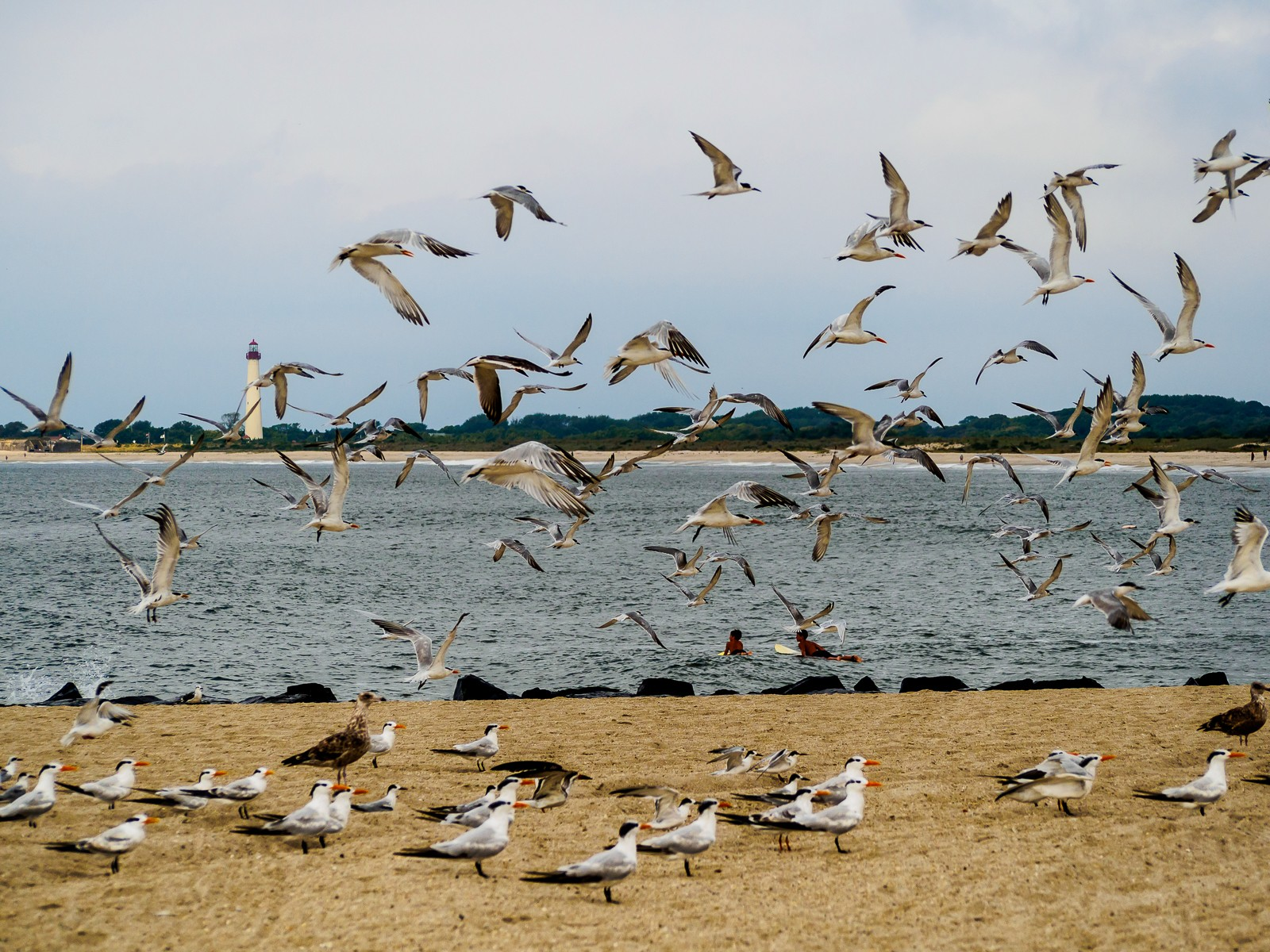 cape-may-beach-7424