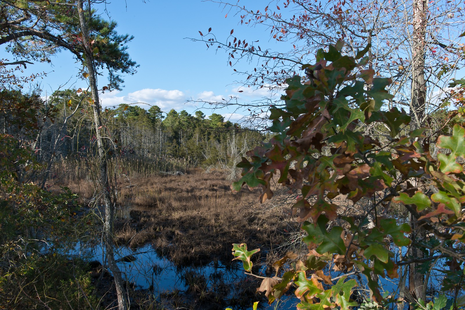 pinelands-5446