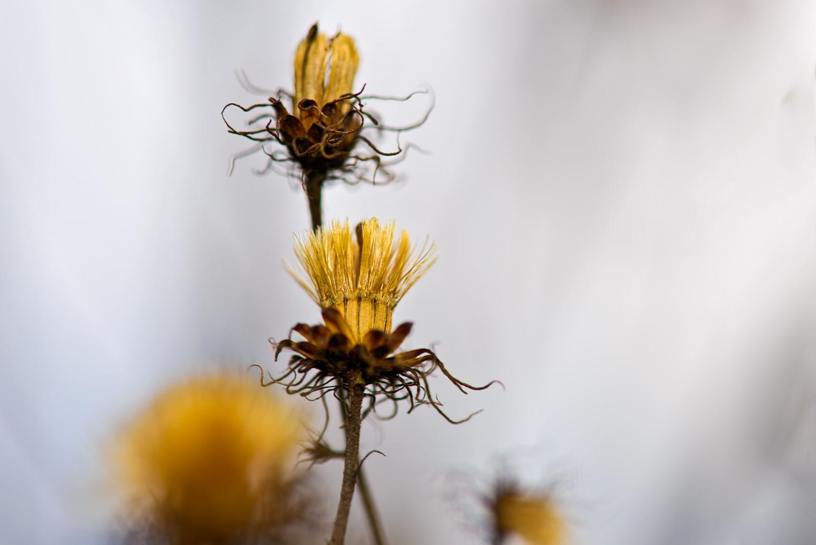 dead-flowers--5