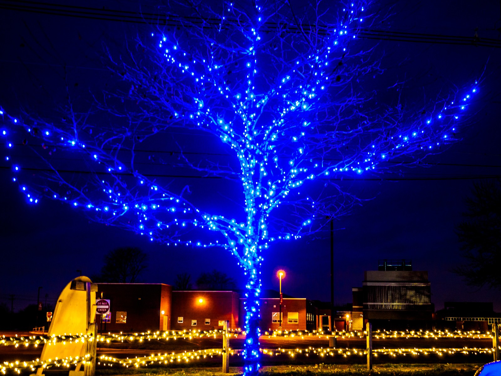 led-blue-tree-260007