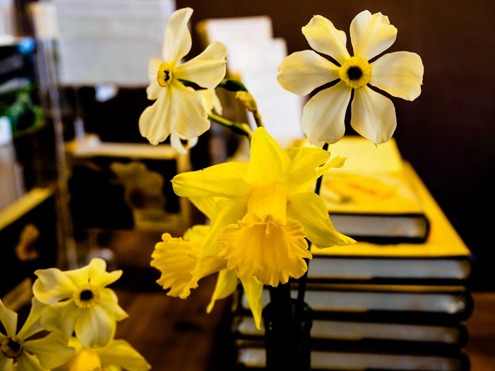 Narcissus-poeticus-4160021