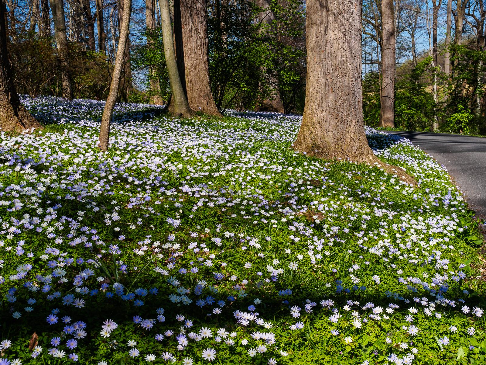 Winterthur-Gardens