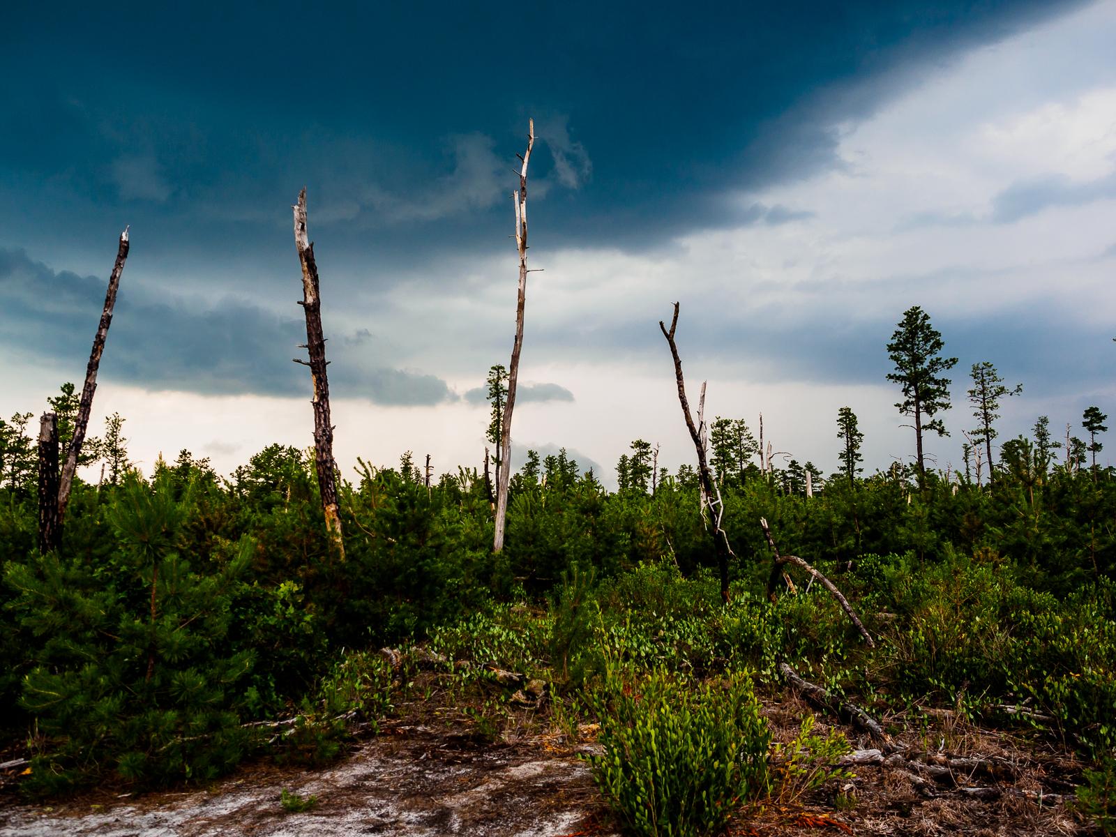 forest-island-Washington-NJ-7080016