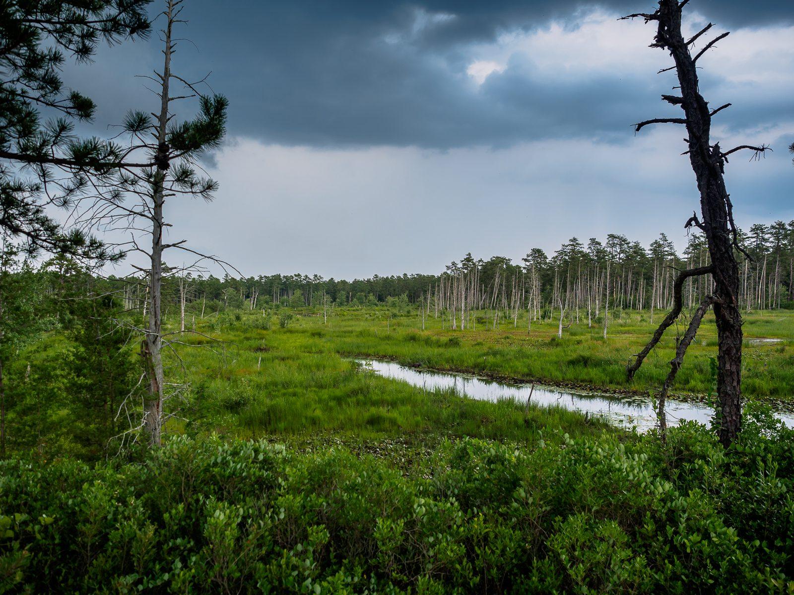 forest-island-Washington-NJ-7080017