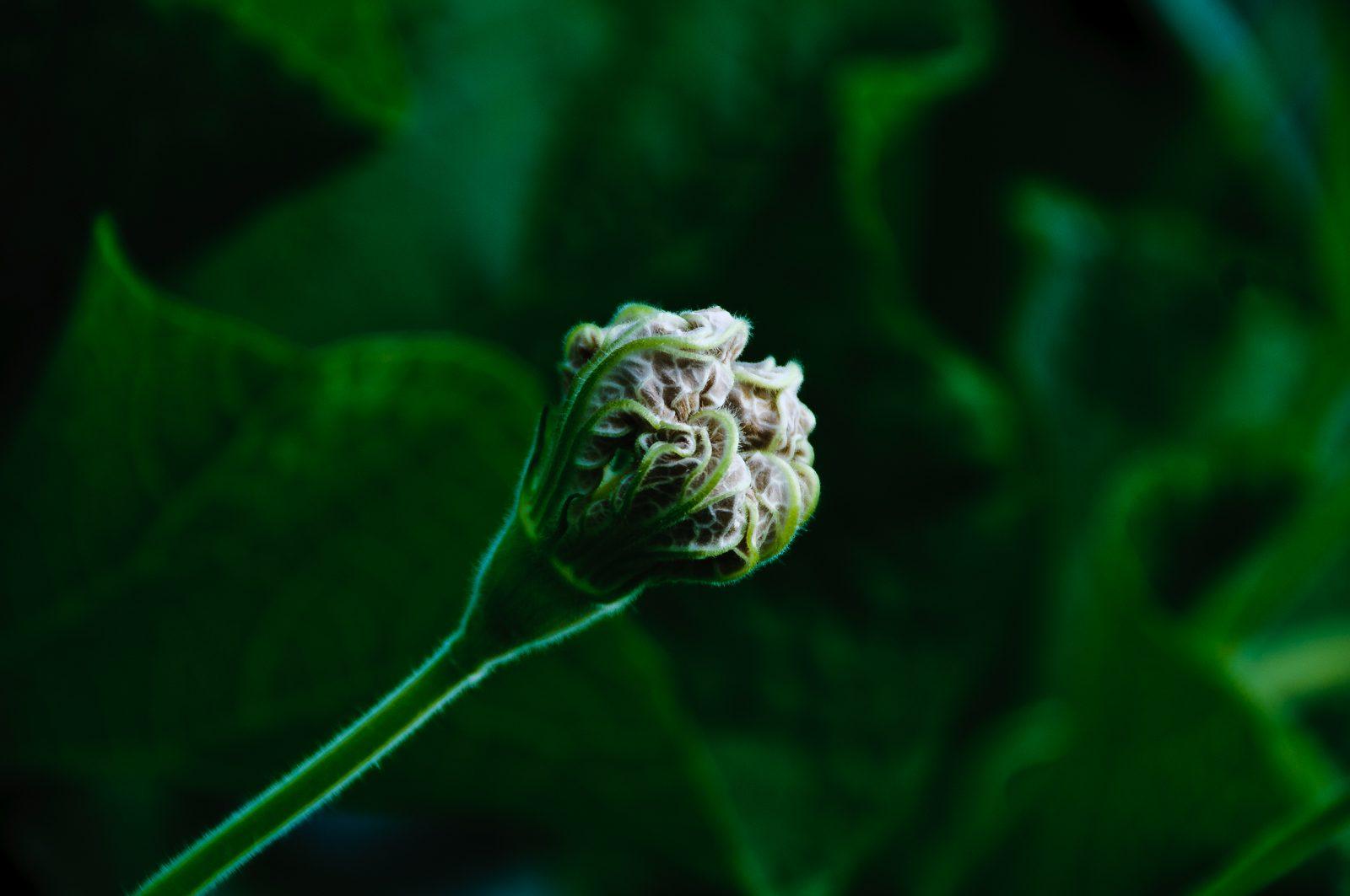 cheryls-plants-0568