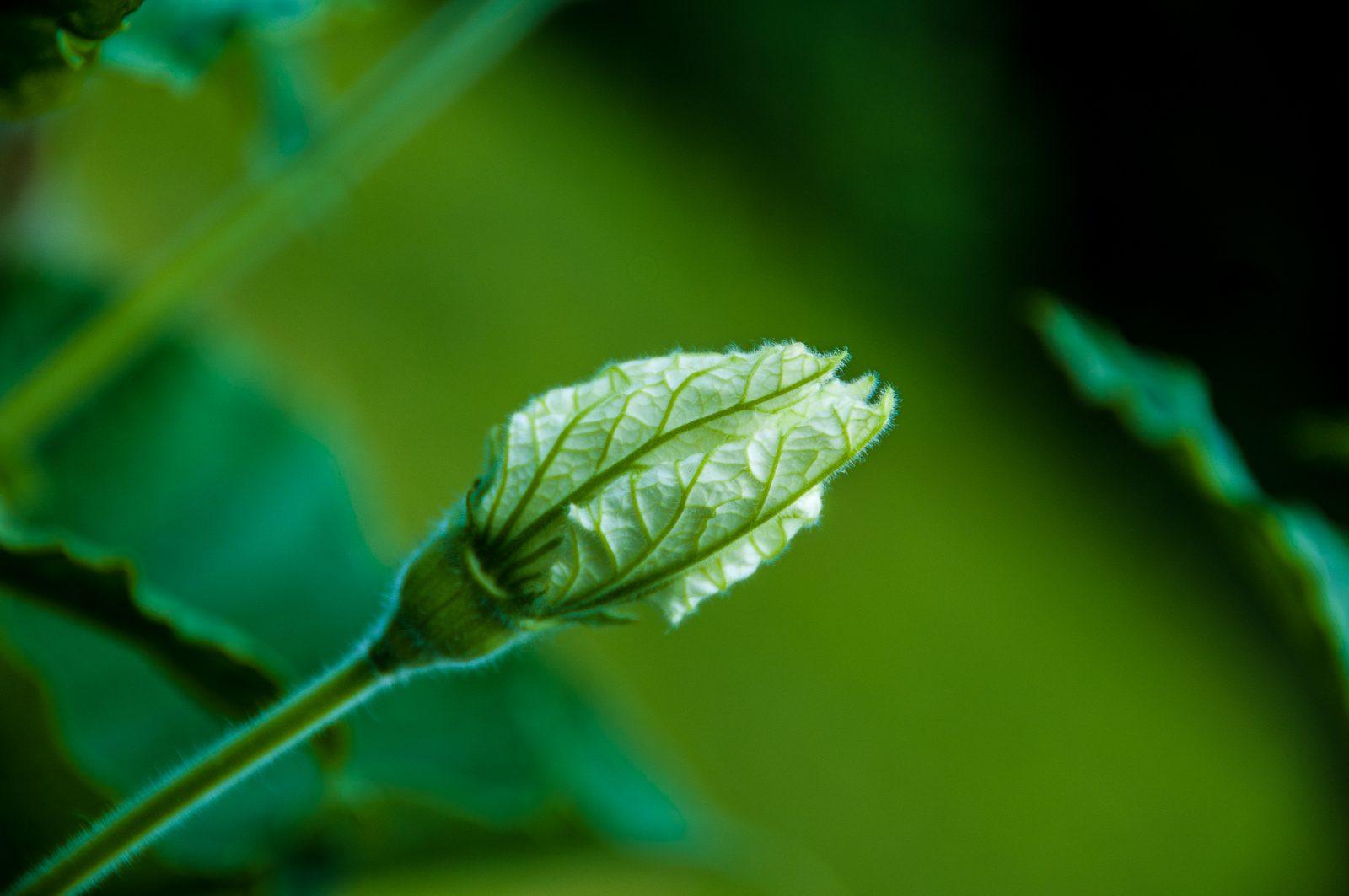 cheryls-plants-0569