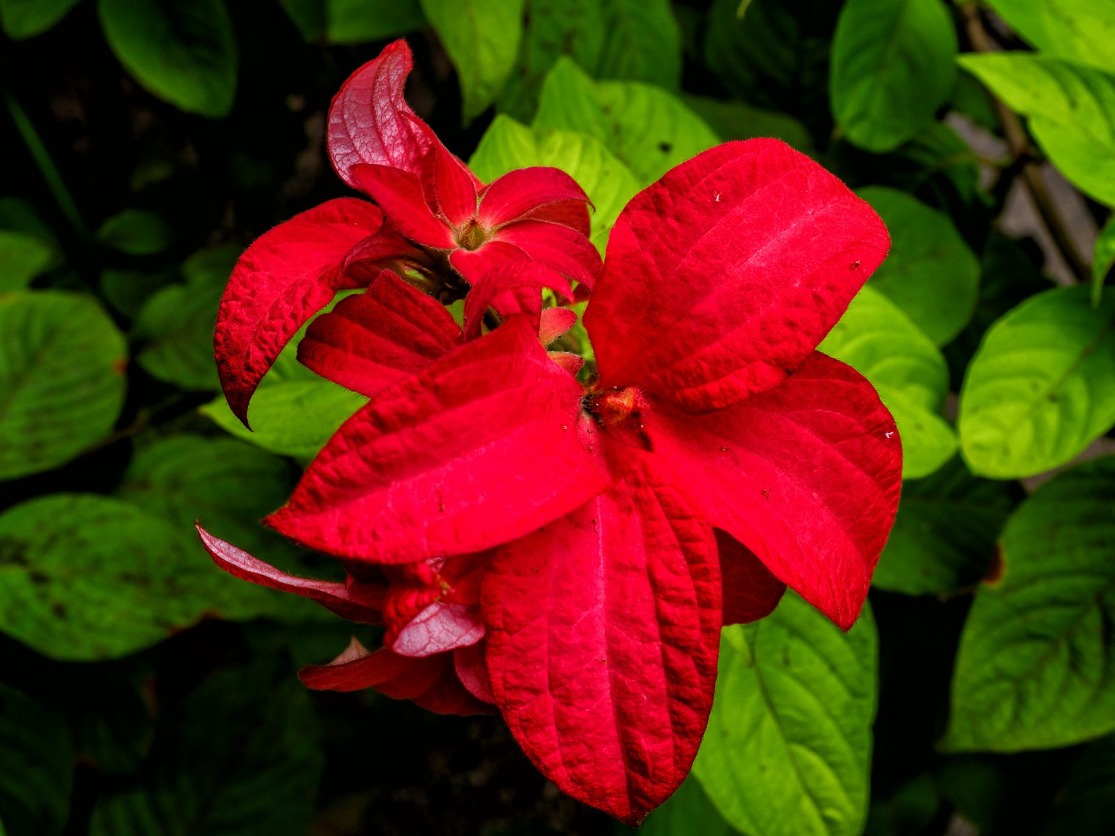 red-flowers--3
