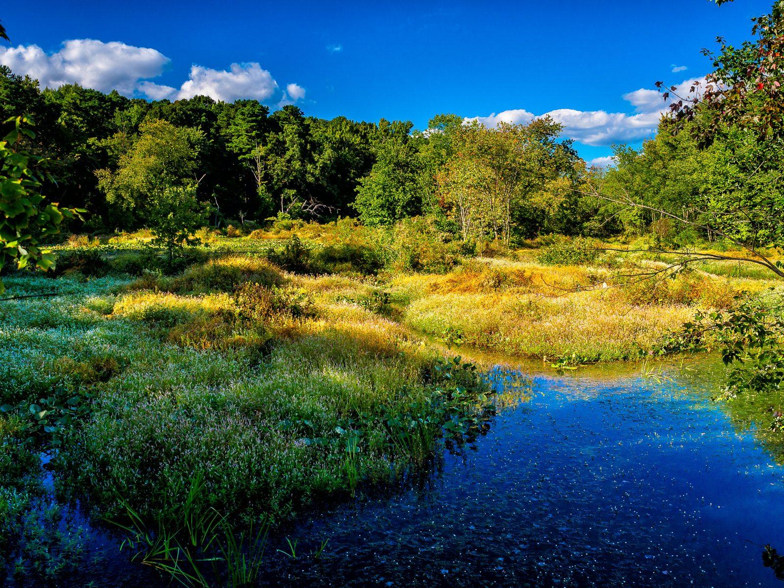 jackson-meadows-landscape