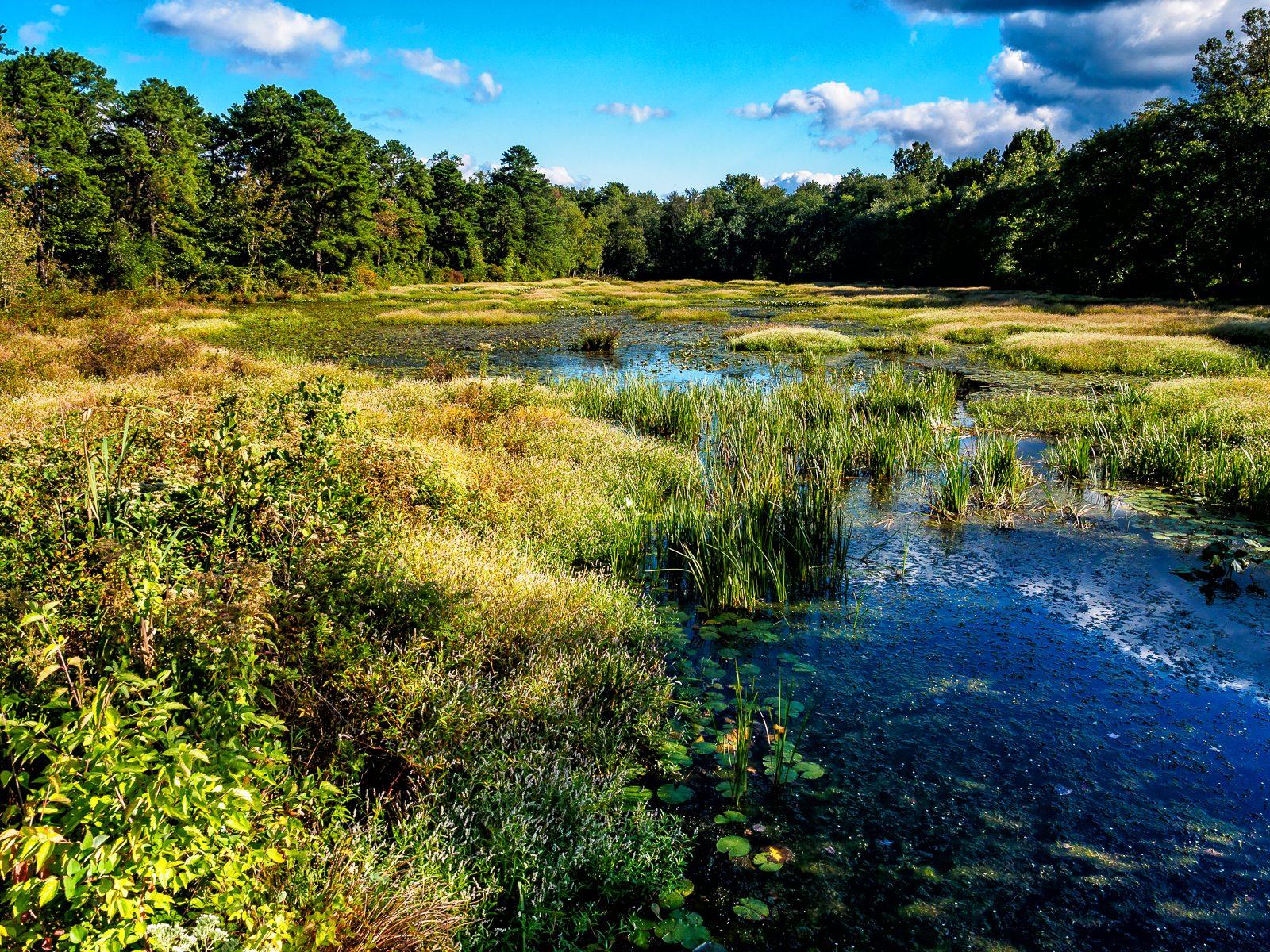 jackson-meadows-landscape-2
