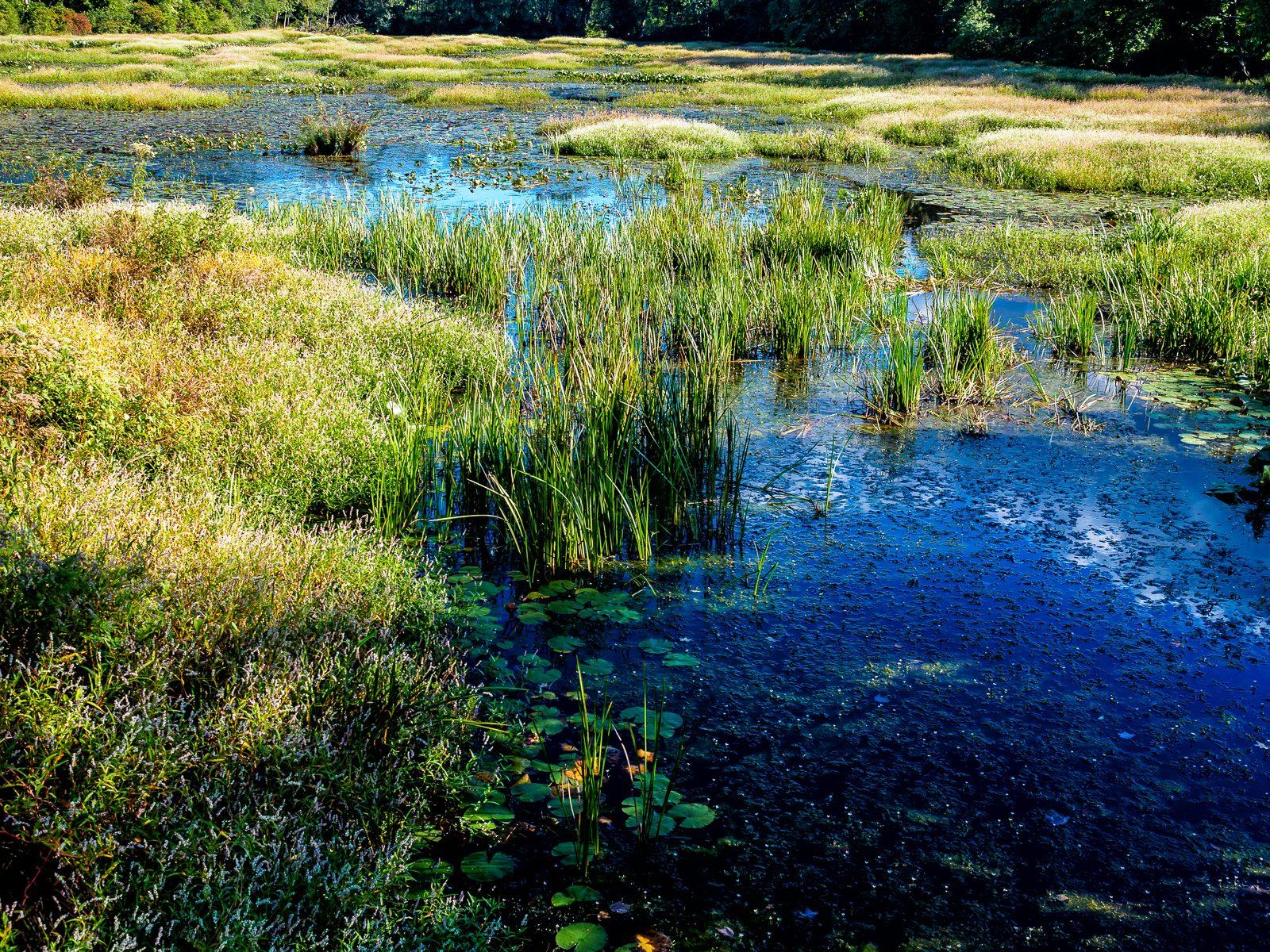 jackson-meadows-landscape-3