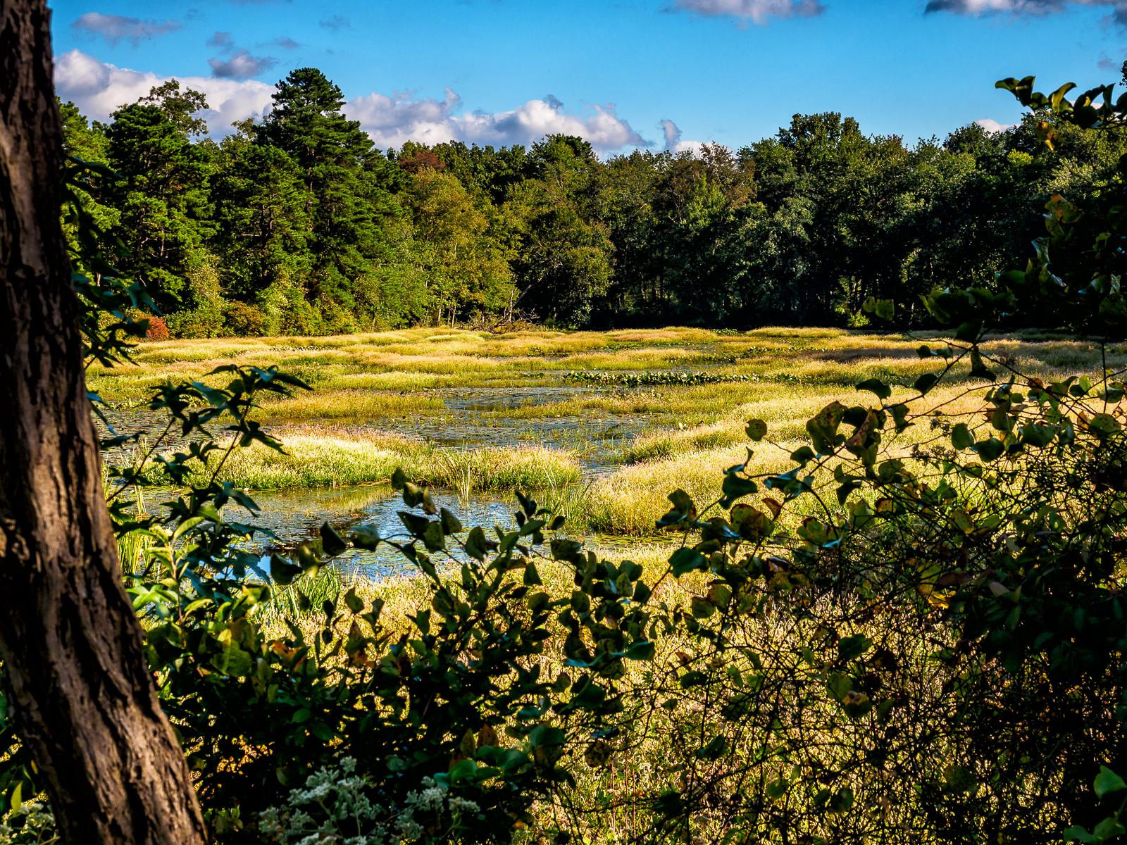 jackson-meadows-landscape-4